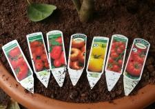 Tomatoe tomato