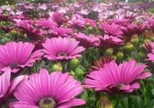Garden Centres in Wexford