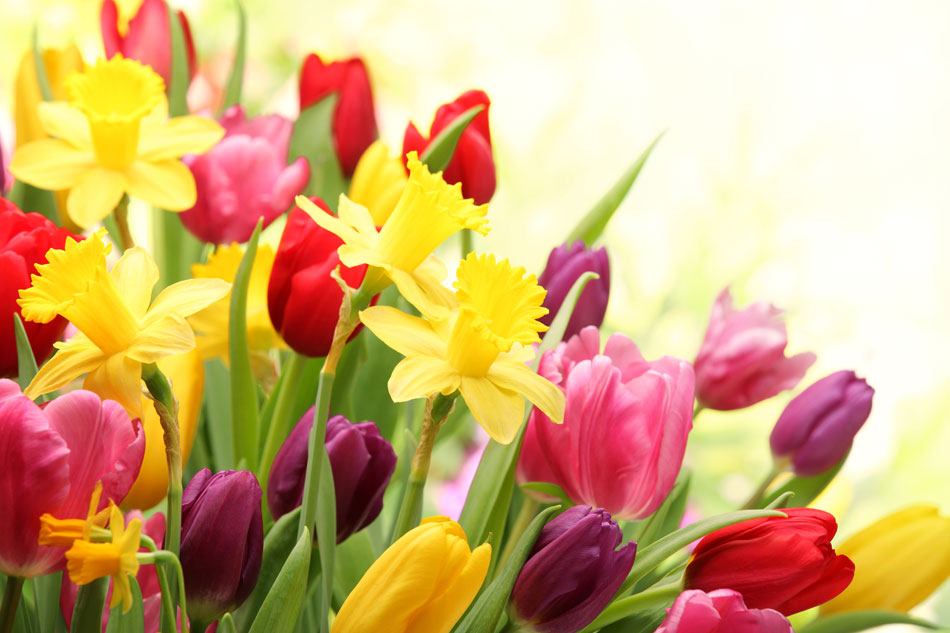 its Time To Plant Spring Bulbs