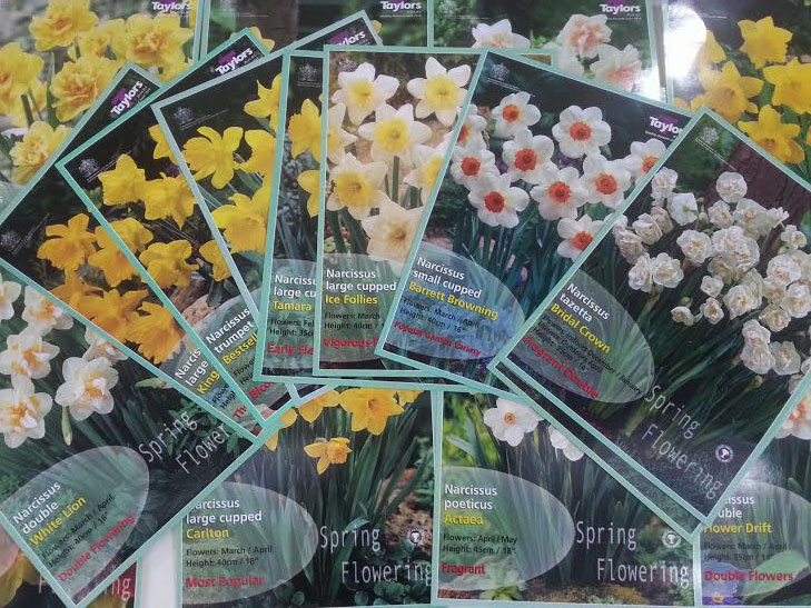 time to plant daffodil bulbs