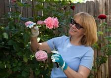 rose care demo