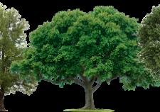 Bunbury Sustainable Wood products
