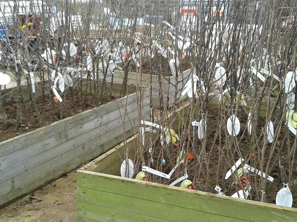 garden jobs november december beechdale garden centre clonroche