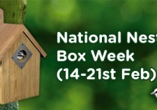 National Nesting Box Week
