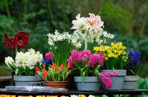 Container and basket planting services wexford