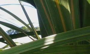 plants-01