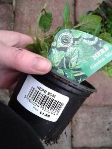 garden-mint