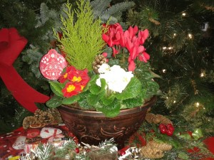 planted-container-xmas-gifts-01