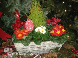 planted-container-xmas-gifts-02